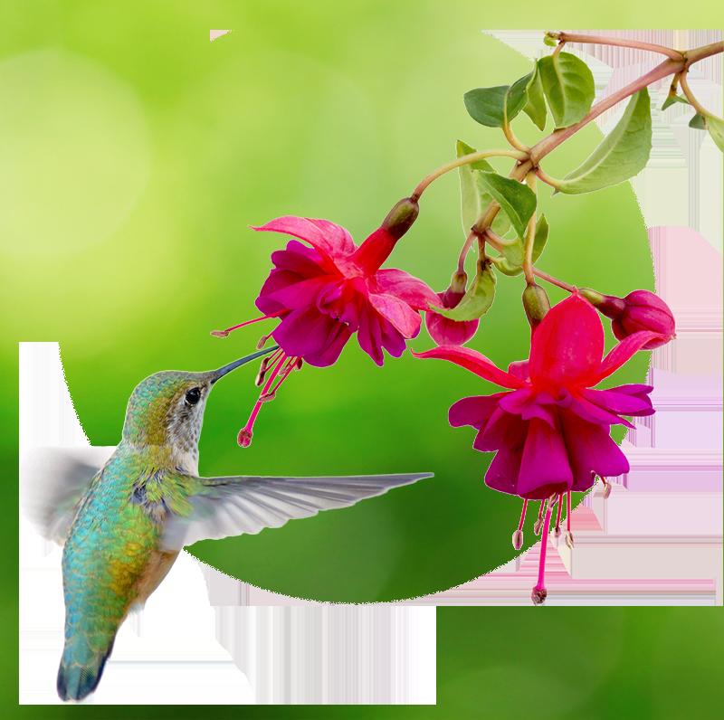 Для автоматического выделения нуклеиновых кислот на магнитных частицах типа Kingfisher предлагаем: